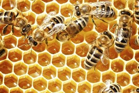 Beehives 1049x700 article