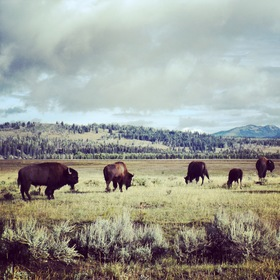 Animals safari credit david duran article