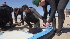 Surfer article