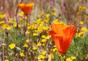 Flowers hero article