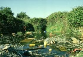 1274982 water pollution and toxic levels for animals the classroom synonym article