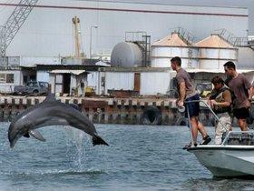 Navy military dolphin manama bahrain 2003 article