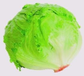 Lettuce iceberg 249 article