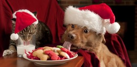 Cat and dog santa cookies 2 featured shutterstock 75208735 article
