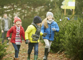 Treeshopping article