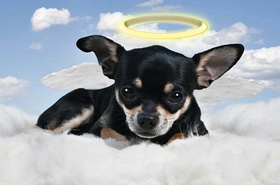Pope francis dogs heaven article