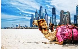 Dubai main1 article