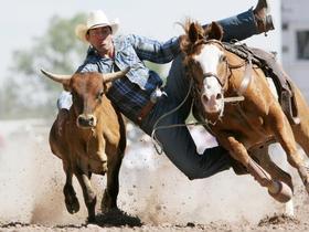 Cattle horseback riding cheyenne frontier days.jpg.rend.tccom.616.462 article