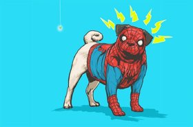 Spiderpug article