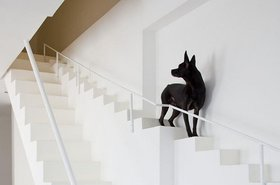 Stairs for dogs1 article