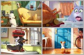 Secret lives of pets article