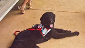 082615 servicedogs thumb large article