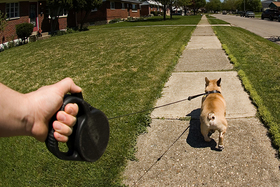 1 retractable leashes walking the dog article