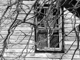 Window 1 article