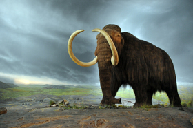 Woolly mammoth article