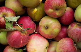 Pick apples 800 article