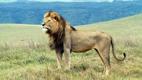 Cecilthelion 1100 article