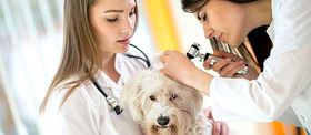 Img article lupus in dogs everything you need to know article
