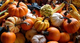Pumpkinsandgourds top article