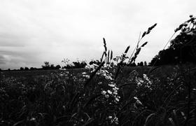 Windy field article