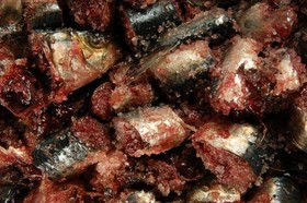Garum roman fish sauce 500x332 article