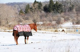 Horse in blanket in snowy pasture article