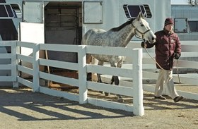Unloading horse from trailer article