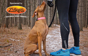 So you want to start...running with your dog article