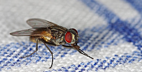 Featured fly article