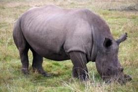 O fim rinocerontes article