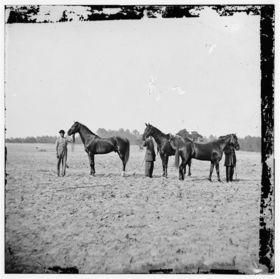 General grants horses article