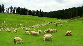 1451592744 1451370844 1449220018 doodhpathri pastures jammu kasmir india may 2014 article