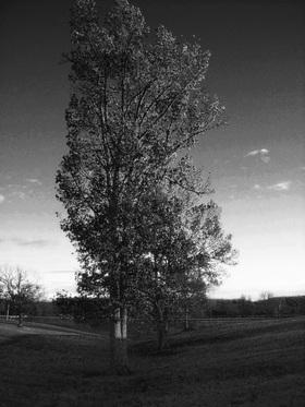 November tree article
