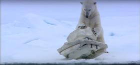 Polarbearspycamera photo1 article