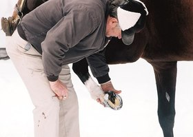 Picking out snow from hooves article