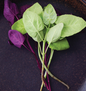 Orach article