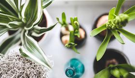 Houseplants kaboompics pixaby article