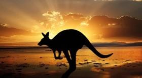 Live australia kangaroo silhouette sunset 300x166 article