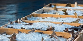 Article seafood traceability main 760x378 article
