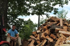 Oak tree img 2370 article