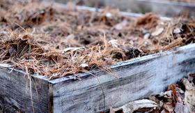 Sandy soil mulch susy morris article