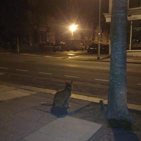 Josh cats1 article