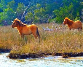 Wild horses 1 article