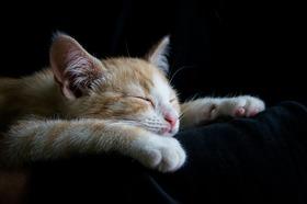 Cat 1056661 960 720 article