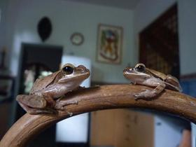 Frog article
