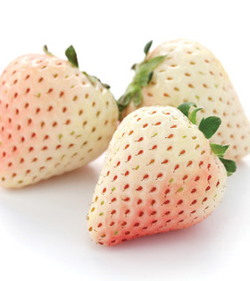 Pineberries article