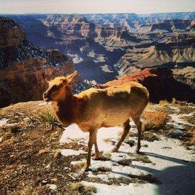 Elk article