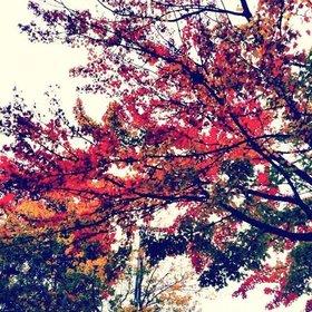 Autumn tree article