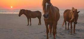 Ponies3 at sunrise article