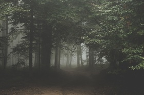 Woods dark and deep article